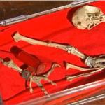 Encuentran restos de paloma mensajera con mensaje codificado de la Segunda Guerra Mundial