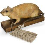 """Inusual """"rata-bomba"""" de la Segunda Guerra Mundial, en subasta"""
