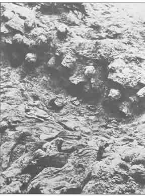 Capas de cadáveres en una de las fosas
