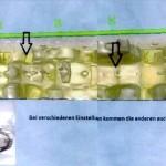 Cazadores de tesoros del 'tren de oro' analizan el sitio del supuesto hallazgo
