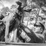 """¿Por qué los soviéticos usaron perros """"suicidas"""" para volar tanques alemanes?"""