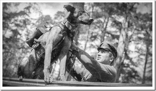 perros-antitanque-0