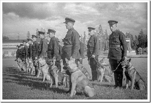 perros-antitanque-1
