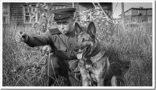 perros-antitanque-3